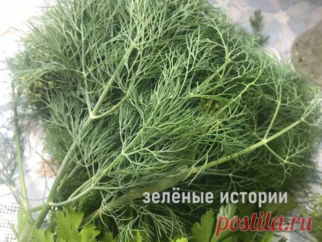 Хитрый способ посева укропа осенью – у меня сочная и ароматная зелень готова через 3 недели | Зелёные истории | Яндекс Дзен