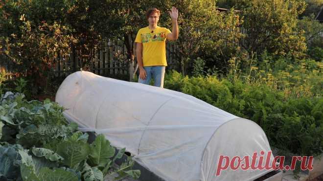 Высаживаем пекинскую капусту во второй половине лета.Видео — Ботаничка.ru