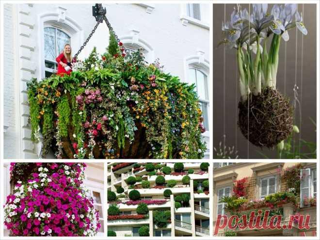 Создаем висячие сады на своем балконе или террасе