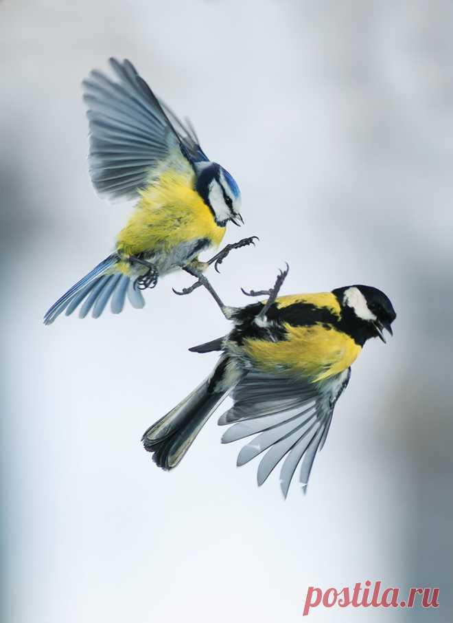 драчка — National Geographic Россия