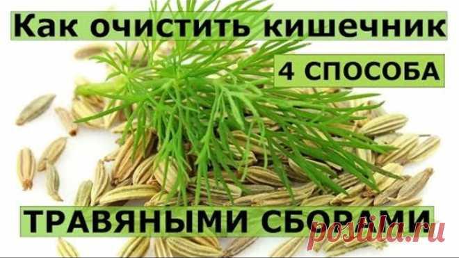 4 рецепта травяных сборов для очищения кишечника.