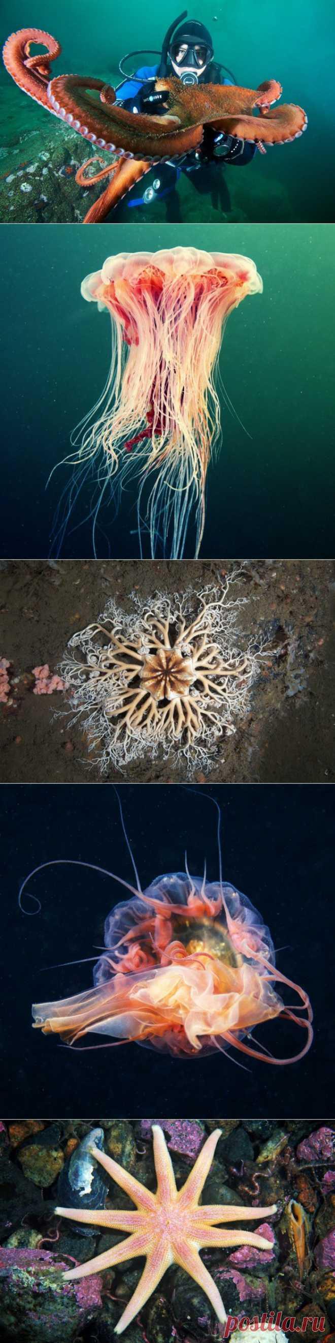 » 30 удивительных подводных фотографий Александра Семенова Это интересно!