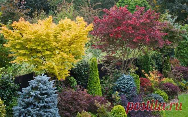 Важность правильной разбивки сада и огорода | Огород Мечты | Яндекс Дзен