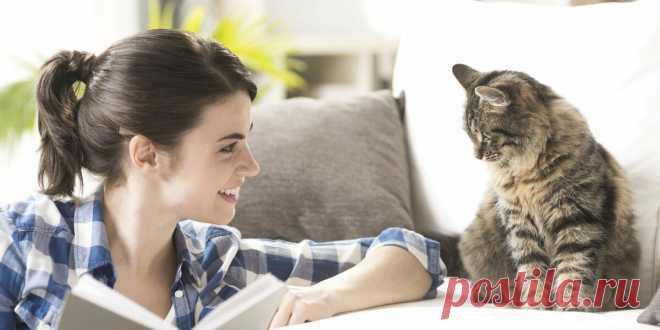 Японские ученые доказали: кошки понимают человеческую речь | Про Кошек | Яндекс Дзен