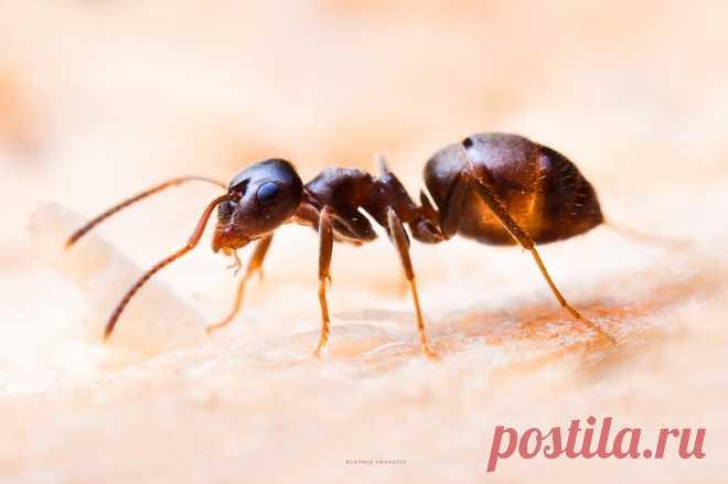 Как отвадить муравьев — Полезные советы