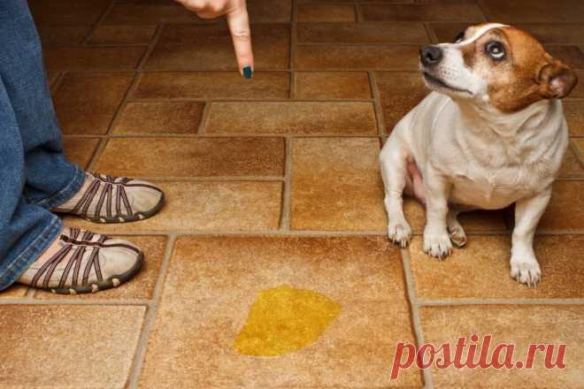 Как навсегда избавиться от запаха кошачьей и собачьей мочи