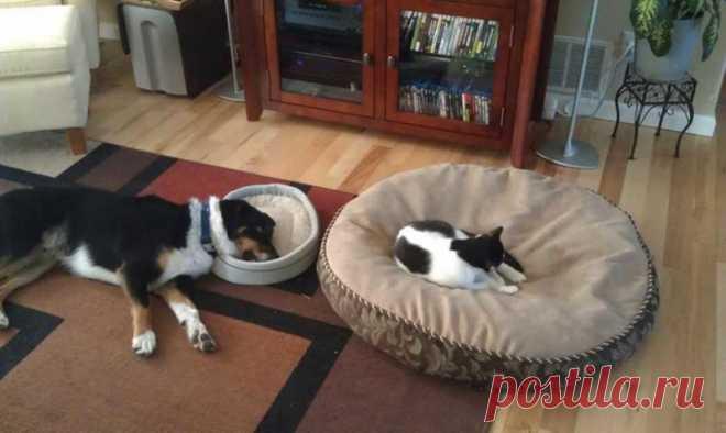 Когда кот в доме хозяин))