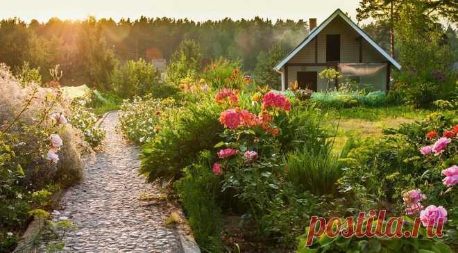 Что нельзя сажать на участке: 12 растений, запрещенных законом Рассказываем, за выращивание каких растений в своем саду можно получить штраф или уголовное наказание.