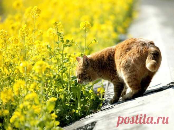 Похоже, эти животные любят нюхать цветы больше, чем вы