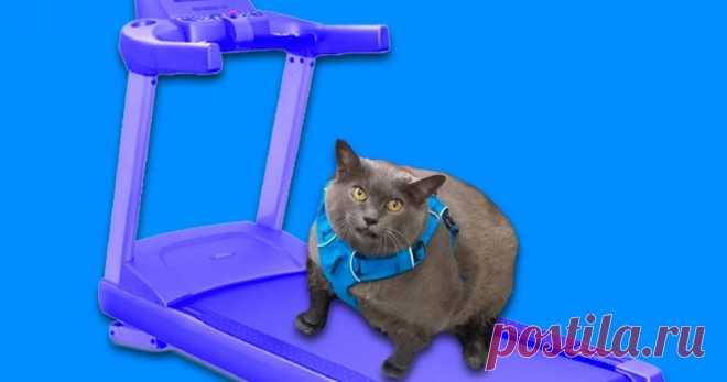 Жирной кошке по имени Шлакоблок назначили тренировки. Вот как она «бегает» Видео, в которым ты узнаешь себя.