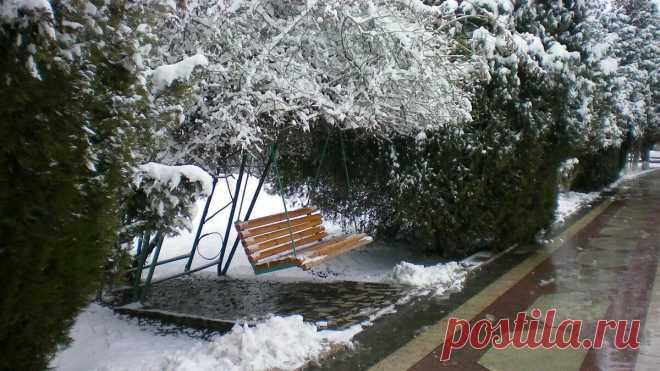 Зима | Сад и дача | Яндекс Дзен