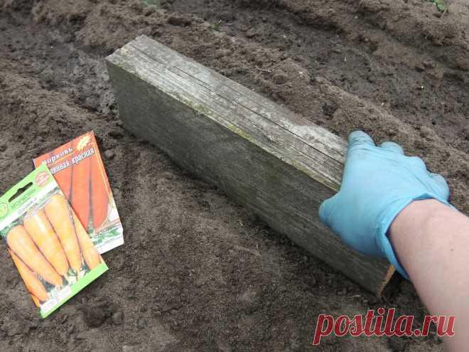 Мой метод летнего посева морковки — «под брусок»: дружно всходит, растет длинной и не требует поливов   Маленький сад на краю Вселенной   Яндекс Дзен