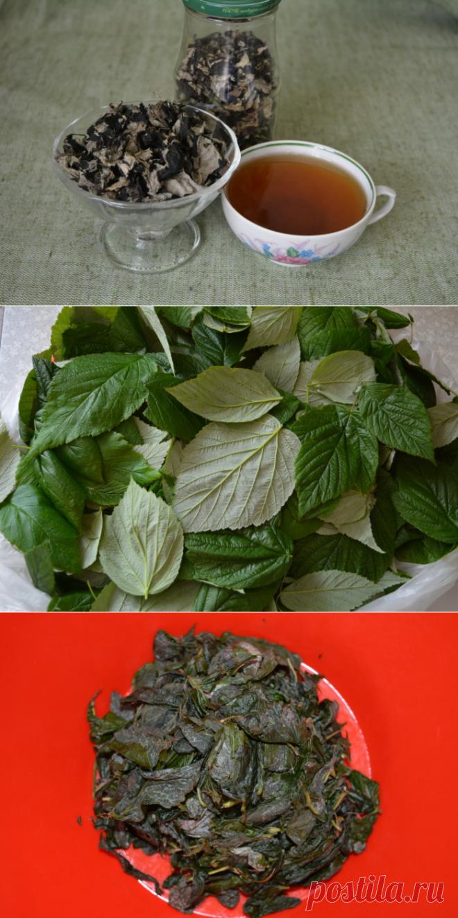 Чай из листьев малины - как сушить листья малины для чая