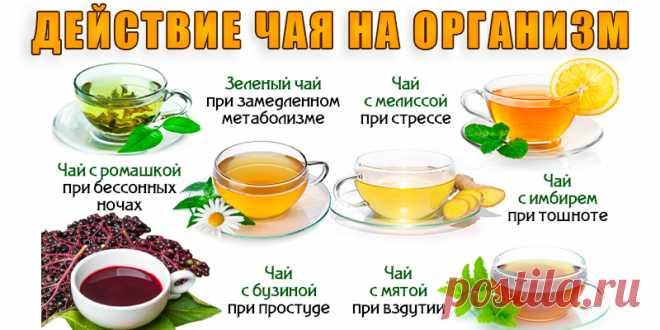 Действие чая на ваш организм   Полезные советы