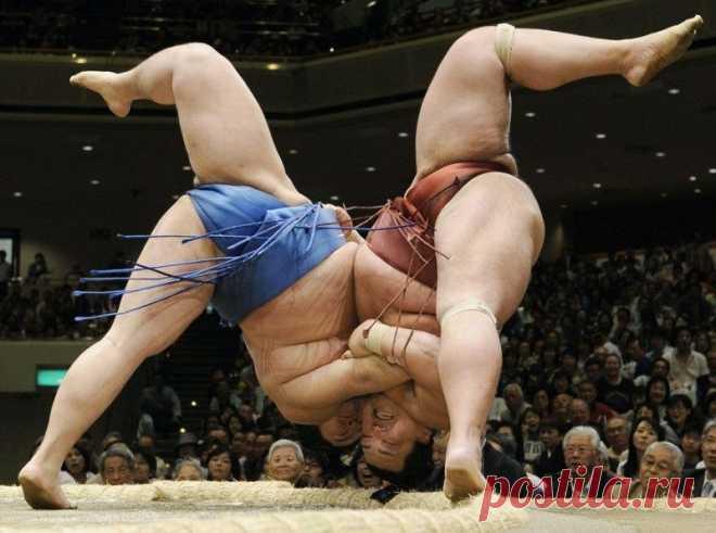 В Японии изучат вопрос отмены запрета для женщин подниматься на арену для сумо | Спорт