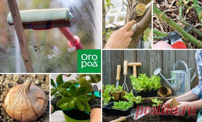 30 дел, которые надо сделать в саду, огороде и цветнике в апреле | Новости (Огород.ru)