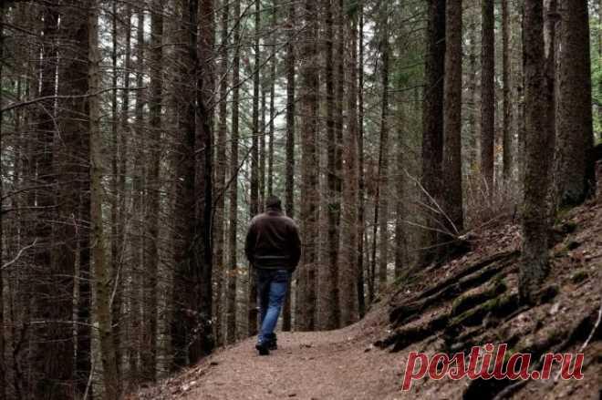 Чего не стоит делать заблудившись в лесу | Делимся советами