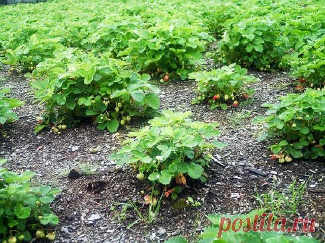 Как и когда в мае и июне рыхлить грядки на огороде: Рыхление почвы при выращивании овощных культур | Светлана Красотка, 25 мая 2021