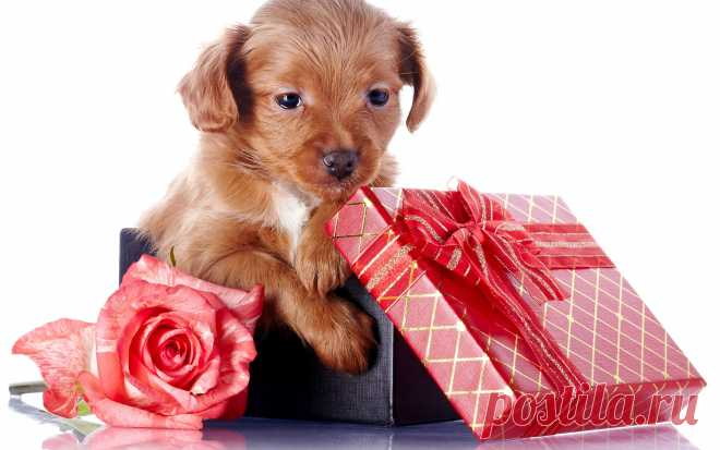 5 отличных подарков для любителей домашних животных Праздники не за горами, пора подумать о подарках, которые можно подарить своим друзьям и близким. Поиск уникальных подарков может стать проблемой
