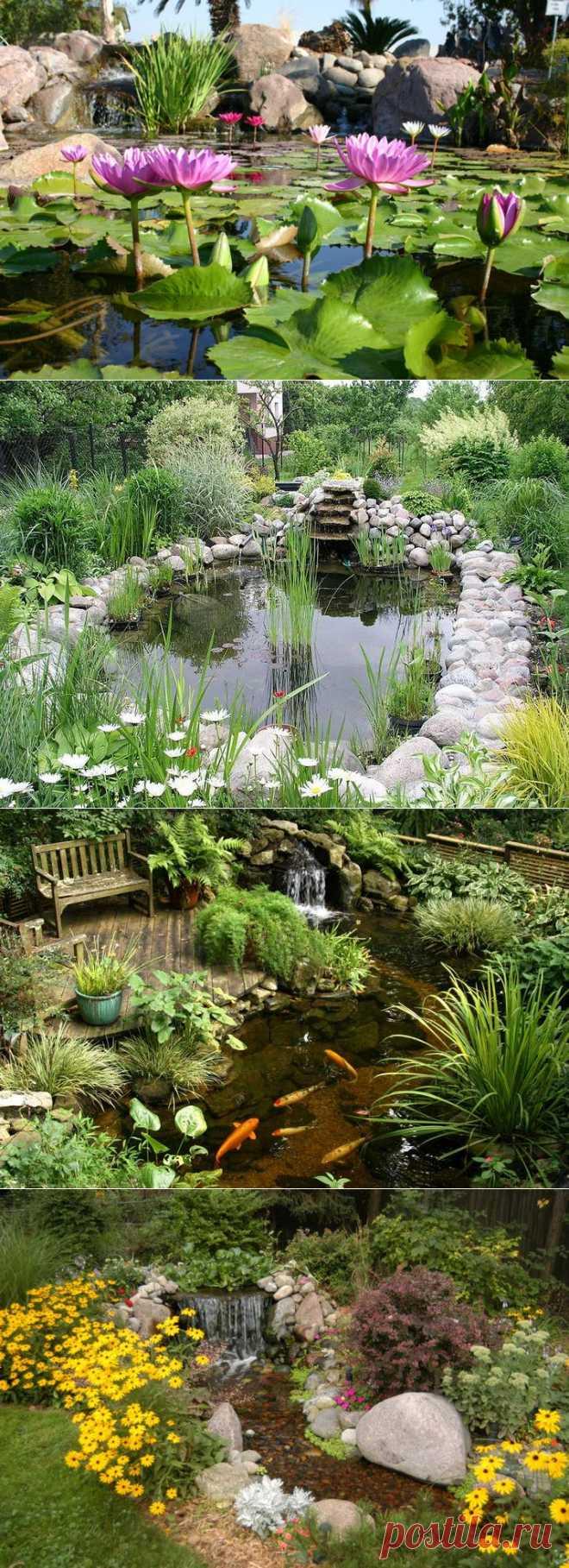 Сады на воде   Наш уютный дом