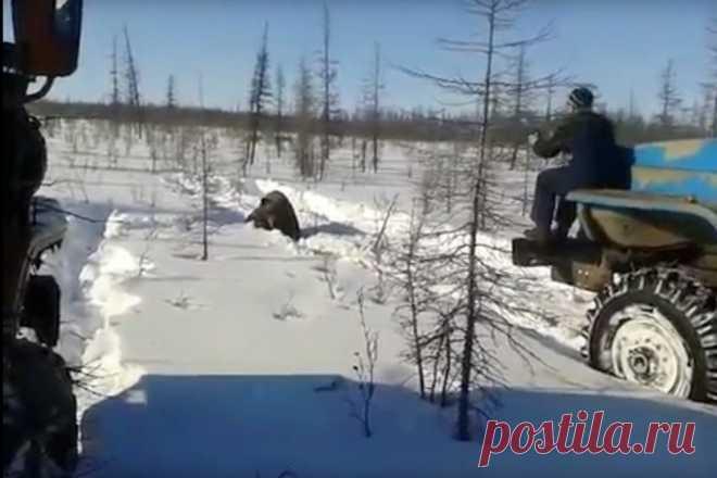 В Якутии убившим медведя живодерам грозит до двух лет тюрьмы — Российская газета