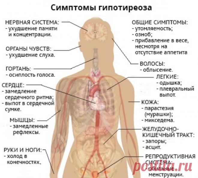 Как правильно понимать симптомы Гипотиреоза | Клиника щитовидной железы | Яндекс Дзен
