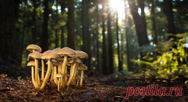 Грибы съедобные и их двойники. Какие грибы собираем в лукошко?   Огородники 🍄 Как не набрать ядовитых грибов. Самые лучшие и ценные грибы имеют своих двойников. Различить их можно по окрасу шляпки и выступающему соку при срезе. Не стоит собирать грибы возле дорог и в загрязненных районах.🍄