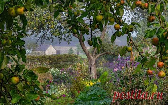 Результаты конкурса Садовый фотограф года 2018