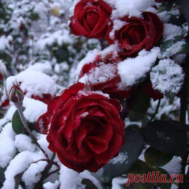 Снег в ноябре
