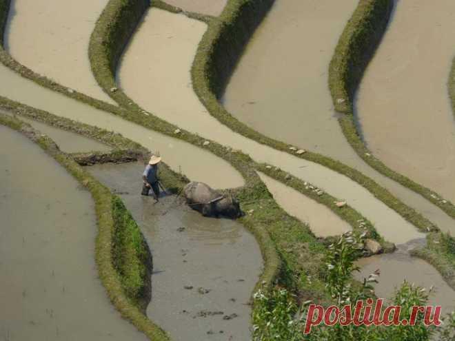 Las terrazas De Hunhe-Hani - Viajamos juntos