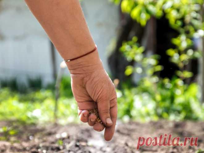Что посеять в июле в огороде? Фото — Ботаничка.ru