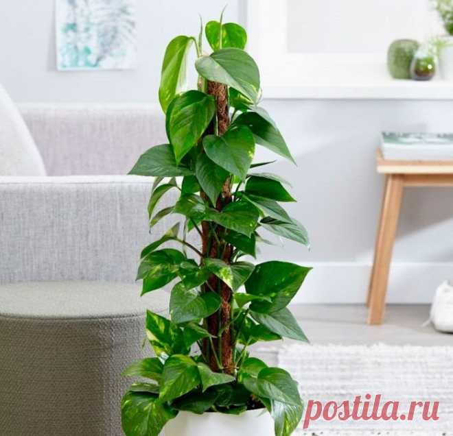 Самые неприхотливые домашние растения