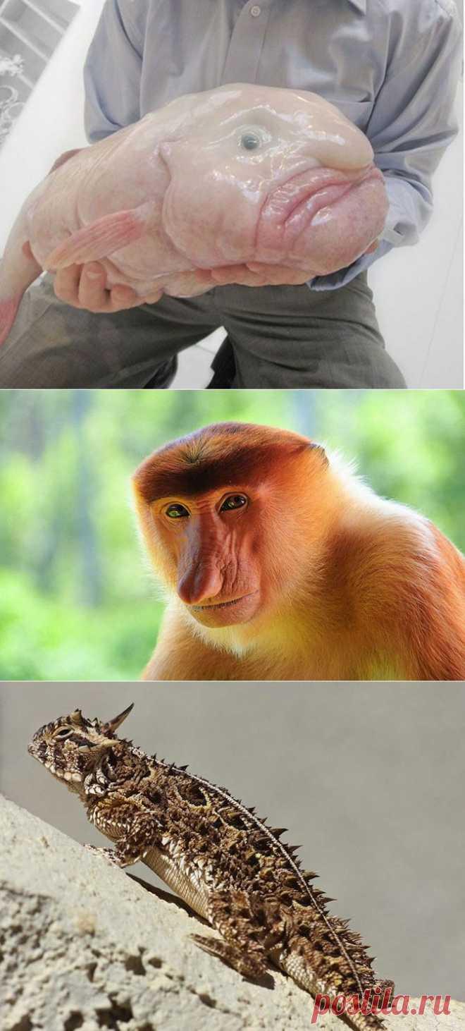 12 противных животных в мире