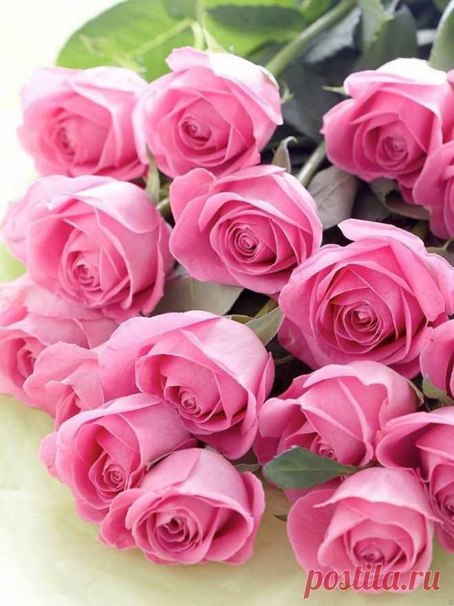 Открытки розы цветы