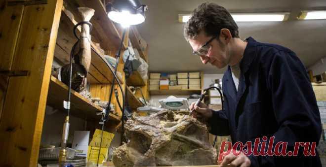 Палеонтологи Санкт-Петербургского и Томского государственных университетов опубликовали статью с первым описанием рода и вида динозавров, обитавших на Земле 120 млн лет назад; ему присвоили имя сибиротитан