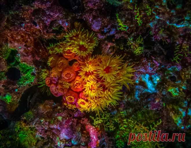 Подводный мир Raja Ampat: vasily_sergeev
