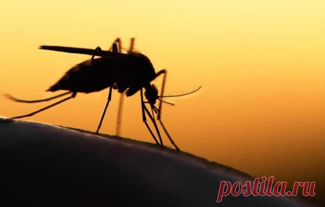 Безопасное средство от комаров с потрясающим эффектом