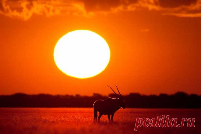 500px / Kalahari Heat by Mario Moreno
