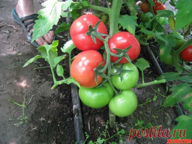 On crackers my tomatoes grow as mentally ill people