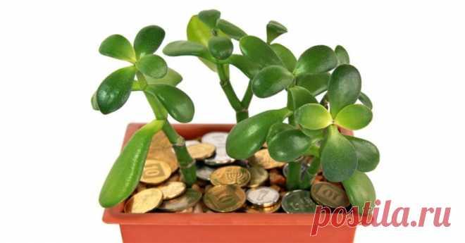 Комнатные растения, которые приносят в дом богатство - Образованная Сова