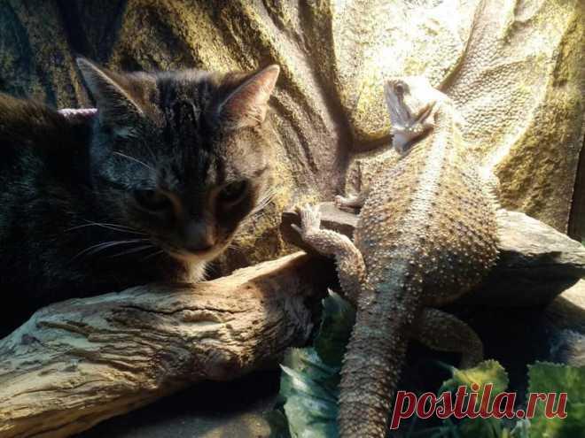 Фото с ящерицей