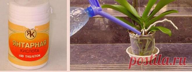 Применение янтарной кислоты для растений: рецепты приготовления подкормки Янтарная кислота является продуктом, который получают искусственным путем после обработки природного янтаря. В малых количествах она входит в состав многих животных и растительных организмов. Но наибольшая концентрация наблюдается в янтаре и буром угле...