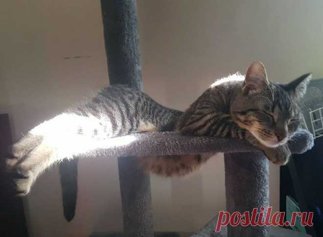 10 фото-доказательств того, что котам удобно везде | Лапы&Хвост | Яндекс Дзен
