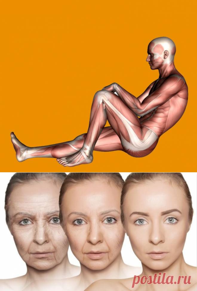 3 этапа старения организма