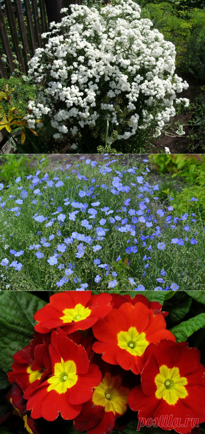 4 обильноцветущих Многолетника которые меня радуют каждый год в саду | Садовод Помощник | Яндекс Дзен