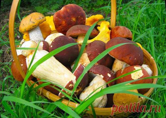 Какие грибы сколько варить