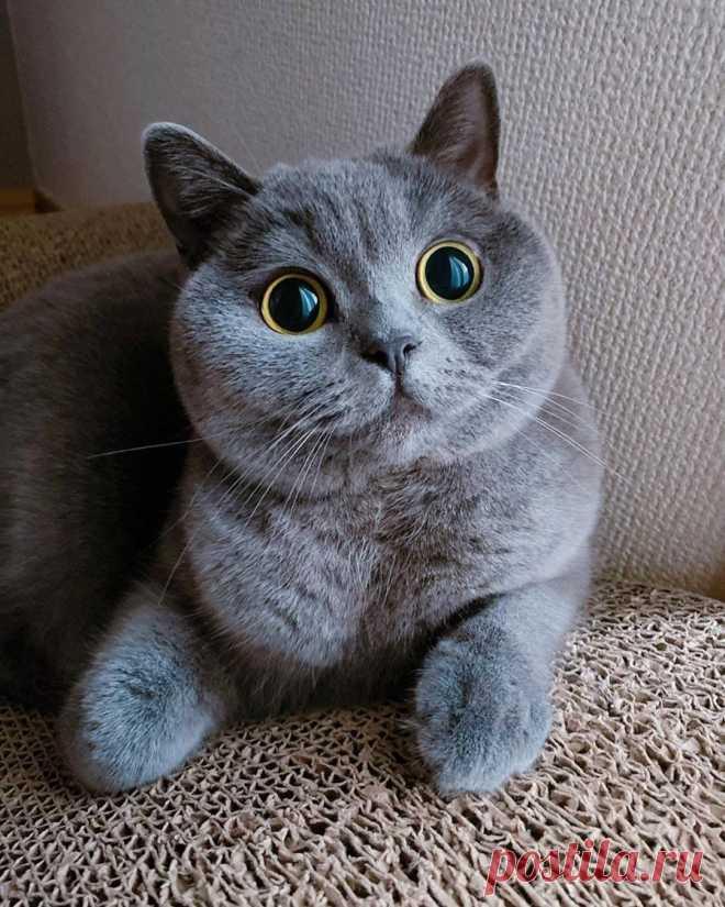 Два бездонных глаза...