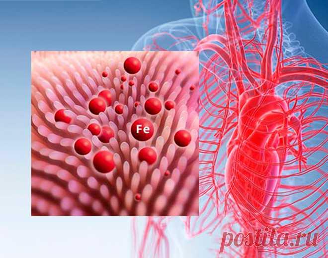 Что делать, если уровень ферритина зашкаливает Ферритином называют белок, который запасает железо в крови и доставляет его в участки тела, которые в нем особенно нуждаются. Его уровень возрастает при острых и хронических стадиях воспаления, поэтому следует контролировать показатель этого белка.