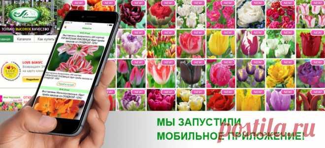 Купить магазин цветы мир увлечений 121 роз хризантем