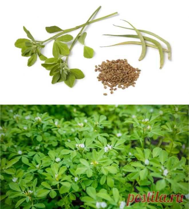Съедобная шамбала: чудо-семена, о которых мы забыли